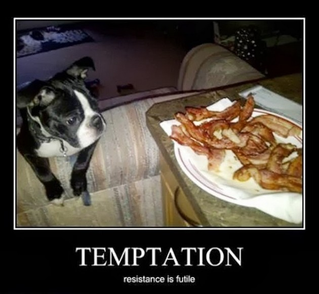 Temptation - Dog humor