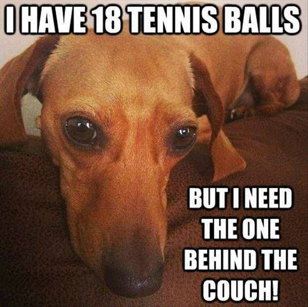 That Special Tennis Ball - Dog humor