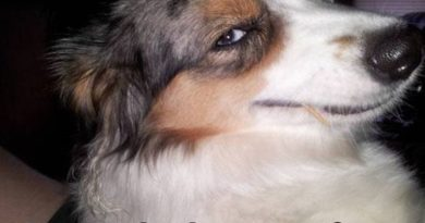 That Face... - Dog humor
