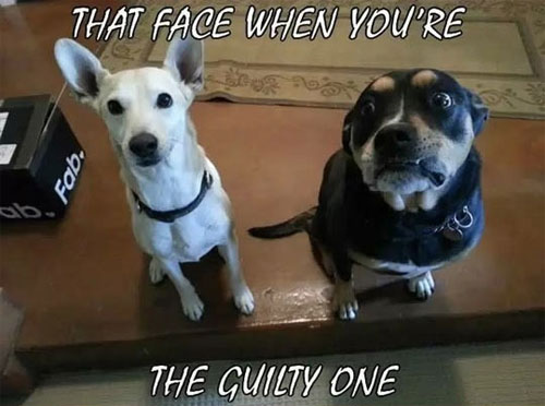 That Guilty Face - Dog humor
