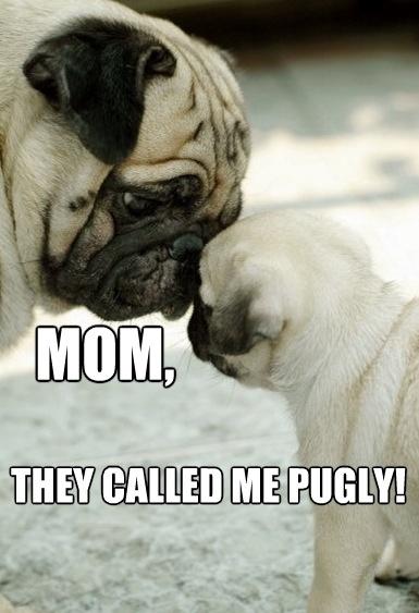 Pugly - Dog humor