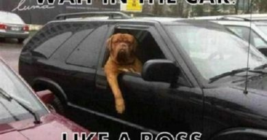 Waiting I The Car Like A Boss - Dog humor