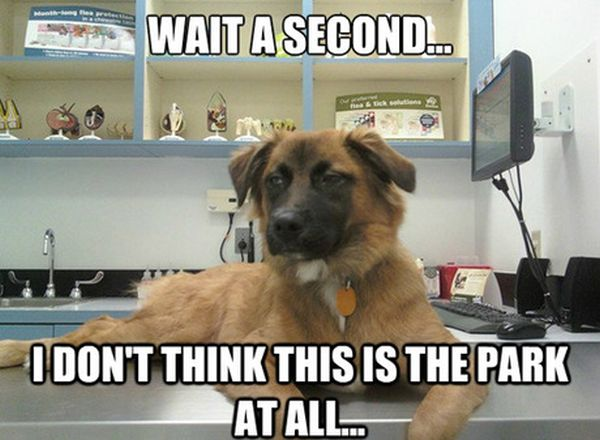 Wait A Second... - Dog humor