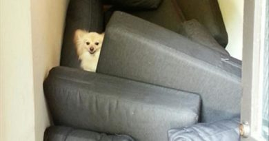 Dog Fort - Dog humor
