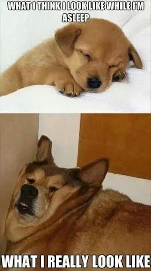 What I Think I Look Like While I'm Asleep - Dog humor