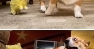 What Is This Thing?!?! - Dog humor