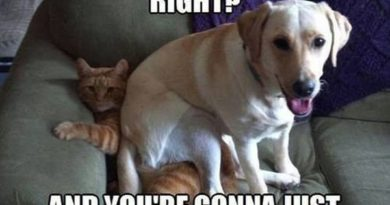 You See What He's Doing - Dog humor