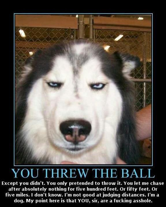 You Threw The Ball - Dog humor