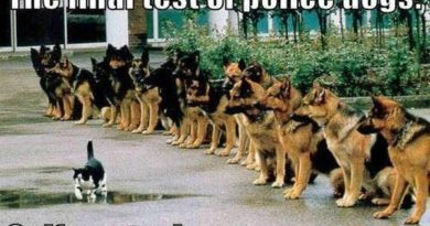 The Final Test For Police Dogs - Dog humor
