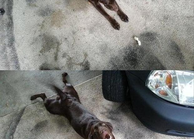 I'm Stretching... - Dog humor