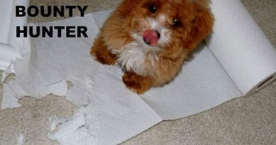 Dog The Bounty Hunter - Dog humor