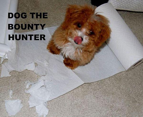 Dog The Bounty Hunter - Dog humor