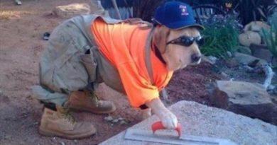 Don't Mind Me - Dog humor