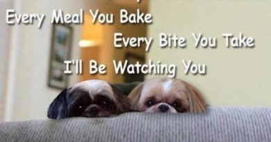 Every Snack You Make - Dog humor