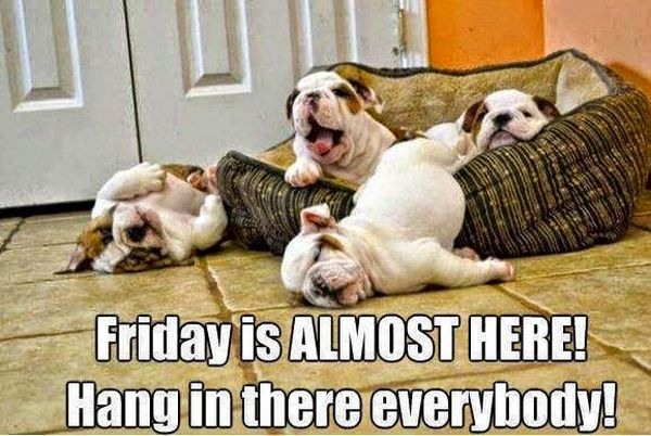 Hang In There Everybody - Dog humor