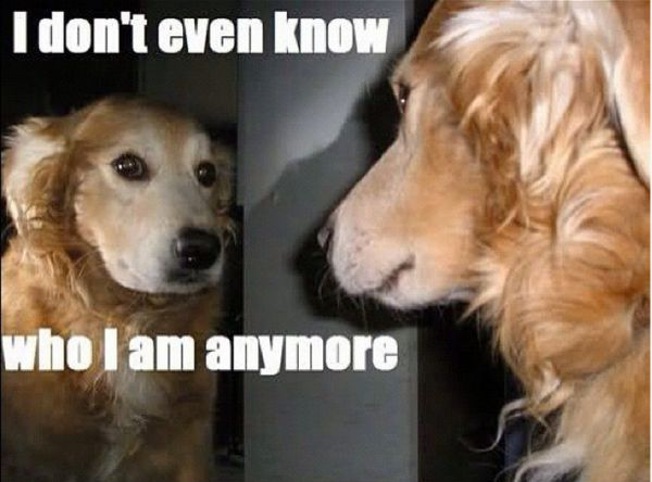 It's So Confusing - Dog humor