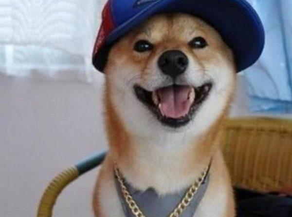 Perfect Time - Dog humor