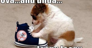 How To Tie Shoelaces - Dog humor