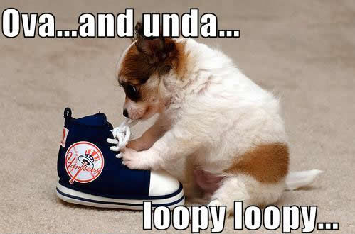 How To Tie Shoelaces - Dog humor