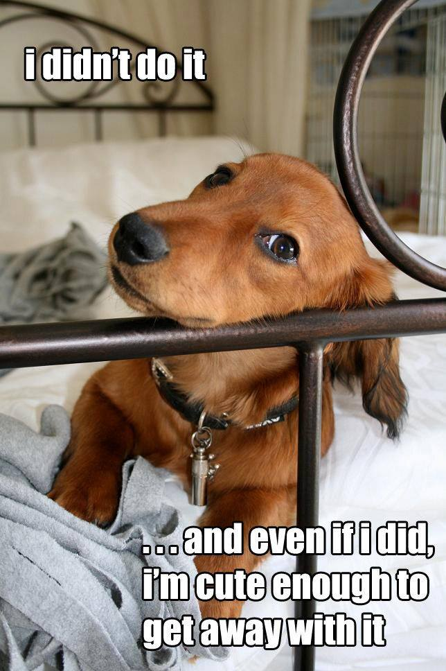 I Didn't Do It - Dog humor