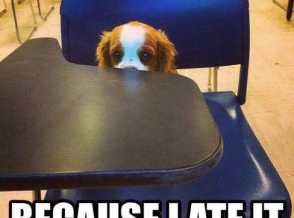 I Don't Have My Homework - Dog humor