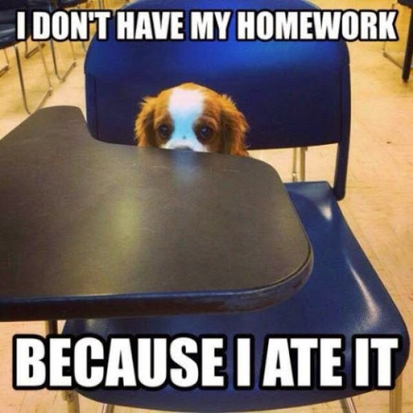 I Don't Have My Homework - Dog humor