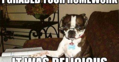 I Graded Your Homework - Dog humor