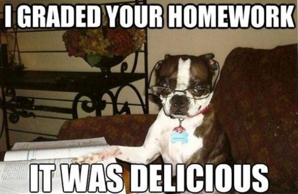 I Graded Your Homework - Dog humor