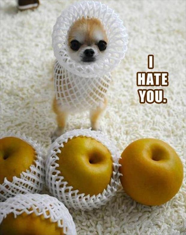 I Hate You - Dog humor