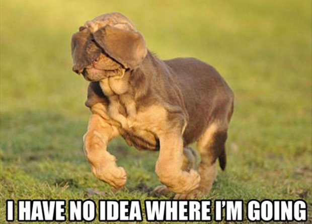 I Have No Idea Where I'm Going - Dog humor