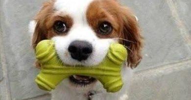 I Just Met You - Dog humor