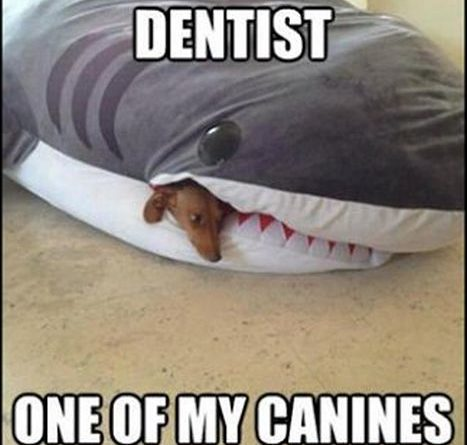 I Need To See a Dentist - Dog humor