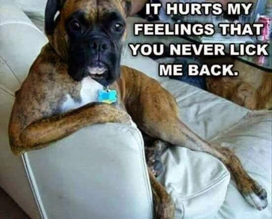 I'm Just Saying - Dog humor