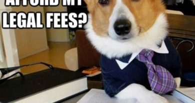 Lawyer Dog - Dog humor