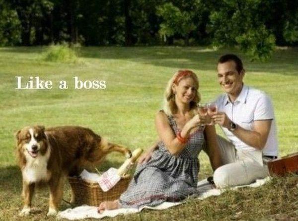 Like A Boss - Dog humor