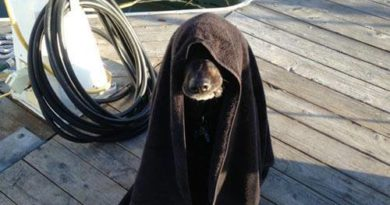 Luke... - Dog humor