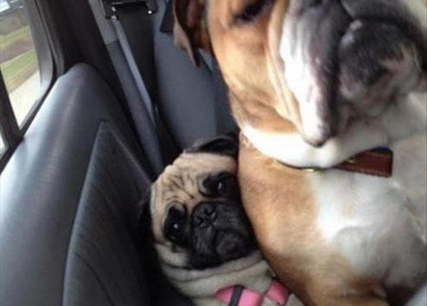 Mooooom!!! - Dog humor