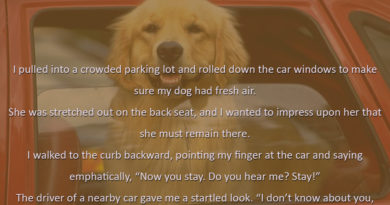 Parking A Dog - Dog humor