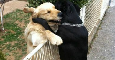 Power Of Love - Dog humor