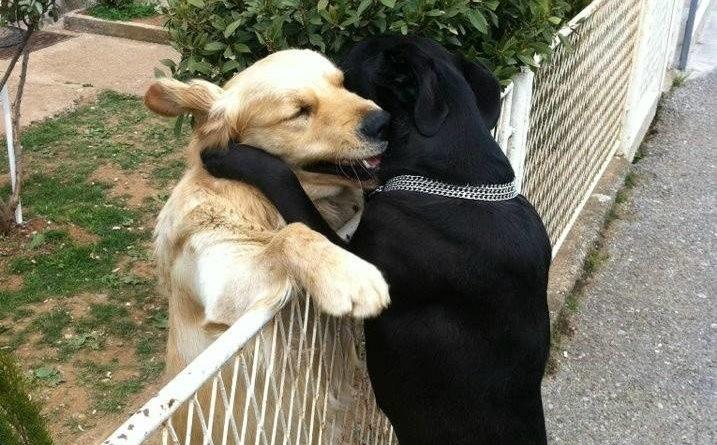 Power Of Love - Dog humor