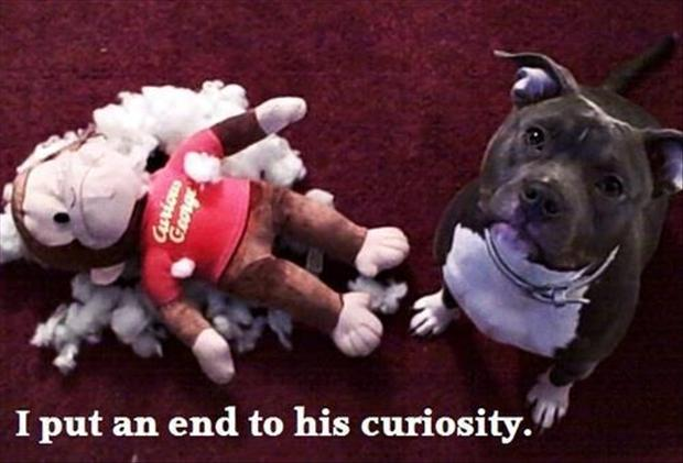 I Put An End To His Curiosity - Dog humor