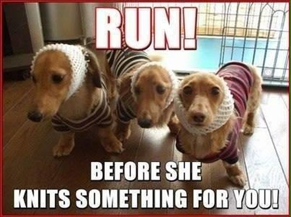Run! - Dog humor