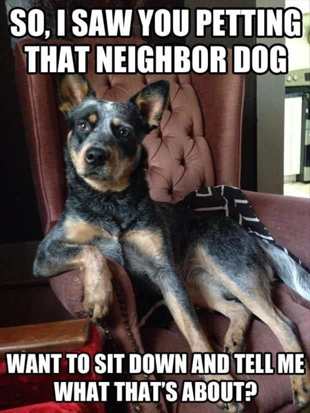 So, I Saw You Petting Neighbor Dog - Dog humor