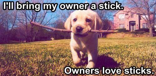Sticks - Dog humor