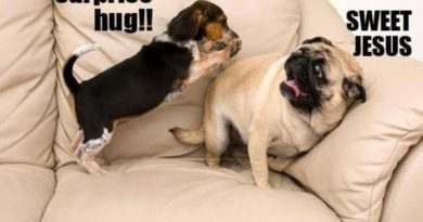 Surprise Hug - Dog humor