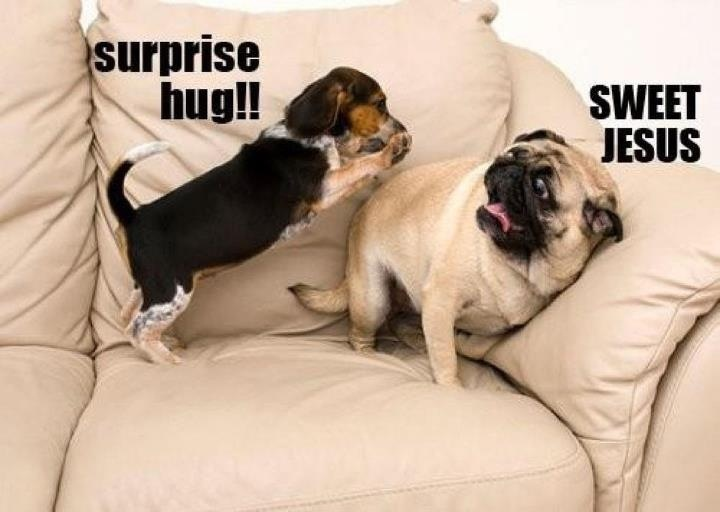 Surprise Hug - Dog humor