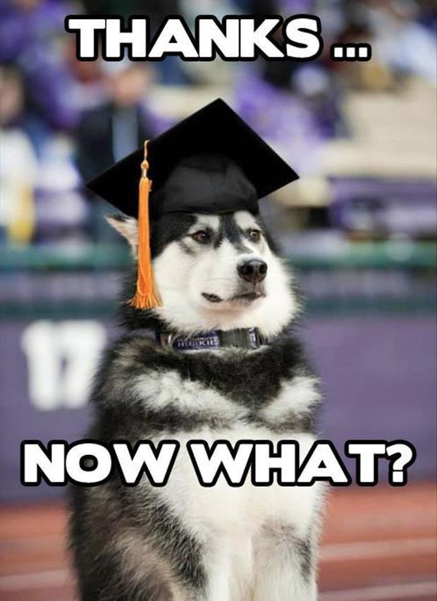 Thanks! - Dog humor