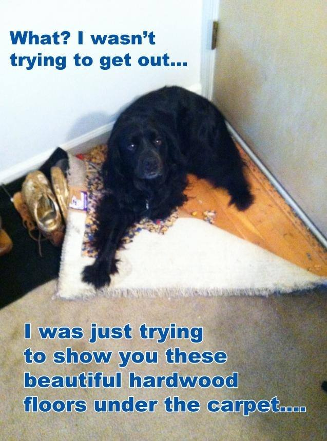 What? - Dog humor