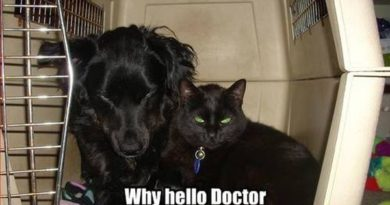 Why Hello Doctor - Dog humor