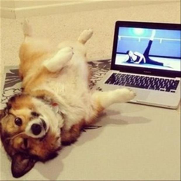 Yoga Class - Dog humor